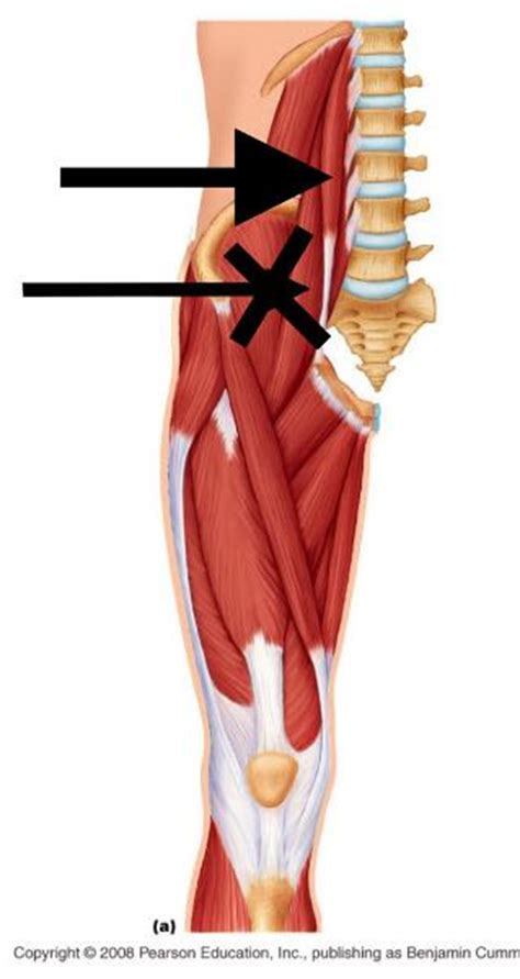 Print Lower Extremity Muscles flashcards | Easy Notecards